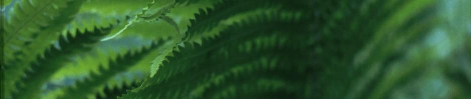 Välkommen till Greenspire Trädgårdskonsult!