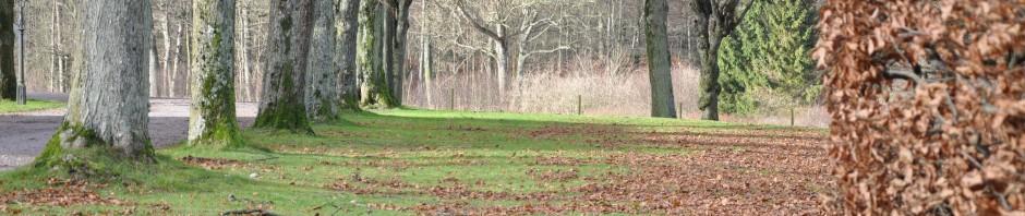 Lövtuggning, lövblåsning eller förbättrat markliv?