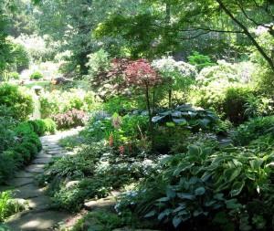 En frodig trädgård med många höga träd och partier med vandrande skugga och helt skuggiga partier.
