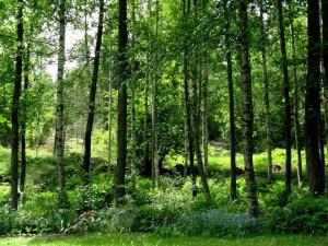 En skogsdunge intill trädgården ökar den lugnande effekten av skog.