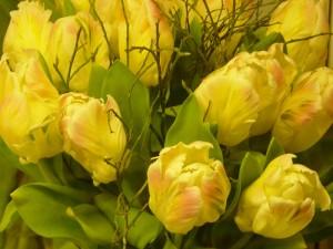 Rosiga, gula tulpaner bundna med blåbärsris blir en maffig bukett.
