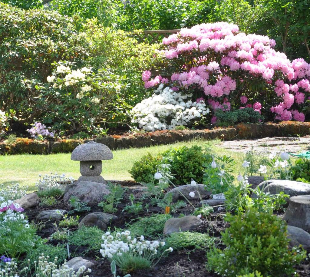 Ett nyplanterat stenparti i förgrunden och ståtliga rhododendron i bakkant.