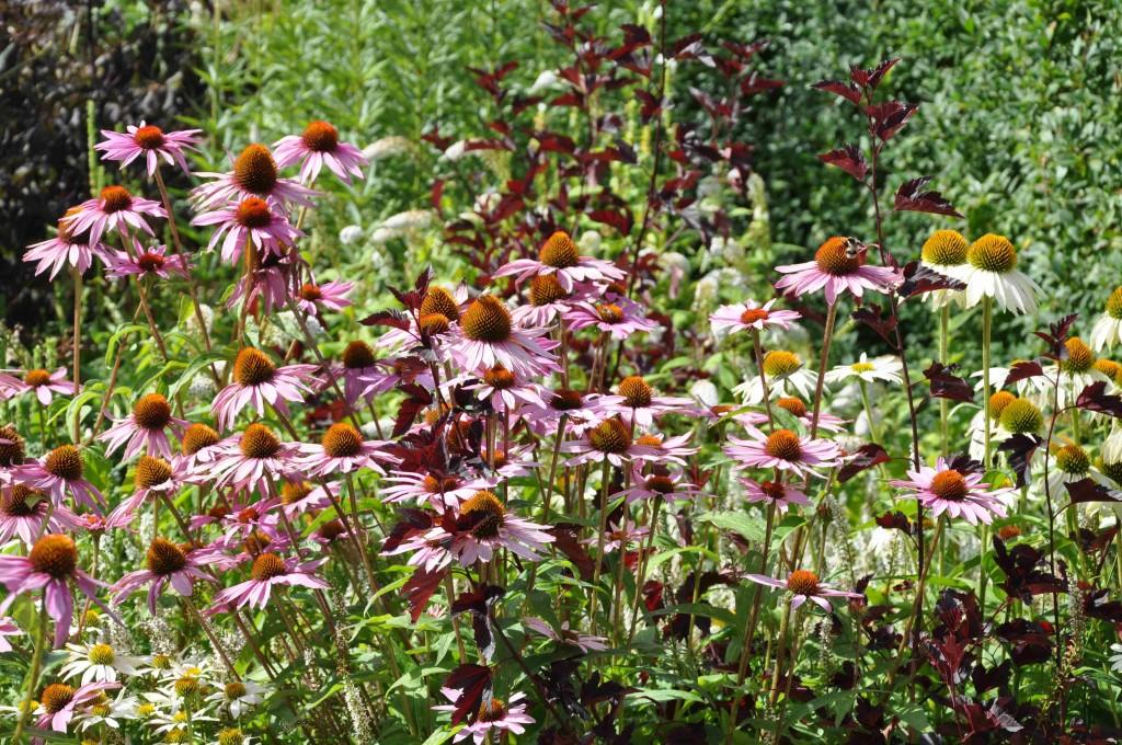 Läketrädgården innehåller växter som använts inom medicinen.