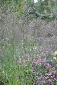 Höga gräs blandade med rosa höstanemon är en vacker kombination.