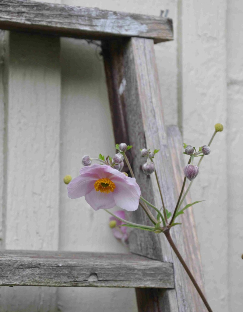 En enkel stege i trä kan bli ett perfekt blickfång.