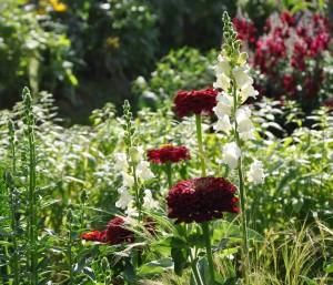 Blomsterprakten är enastående i Mandelmanns trädgårdar.