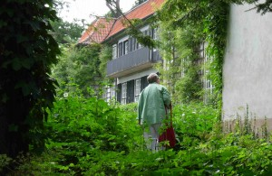 Den engelska vilda parken är grön och lummig.