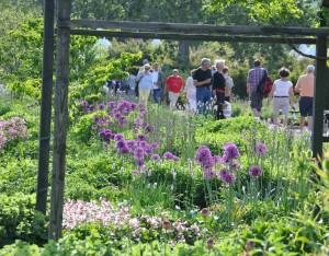 Härliga perenner blommar som bäst i Slottsparken i Malmö.