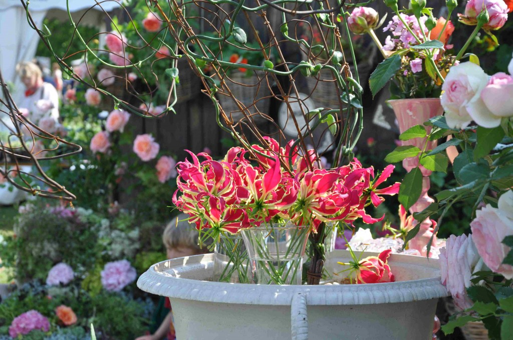 Gloriosa är en ovanlig snittblomma och krukväxt.