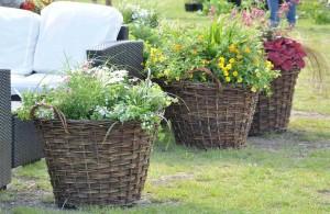 Sommarblommor planterade i pilekorgar kan flyttas runt i trädgården efter behov.