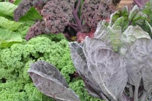 Kålväxter är rika på antioxidanter och vitaminer.