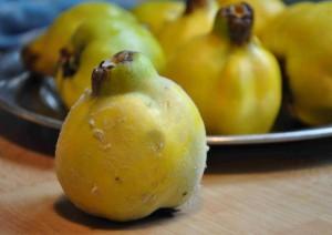 Kvitten är ett litet träd som växer i zon 1 (-2) och ger doftande frukter.