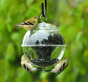 Fågelmaten kan gärna läggas upp på ett snyggt sätt i ett fågelbord.