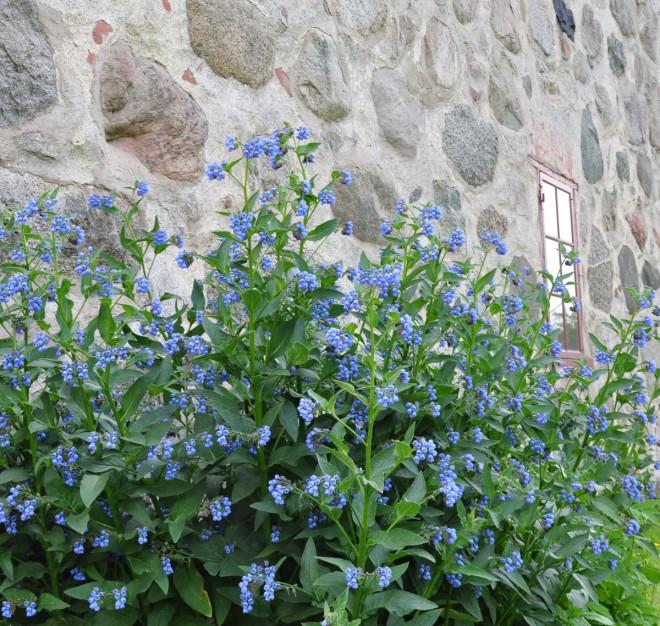 Vallört och klöver är viktiga nektarväxter.