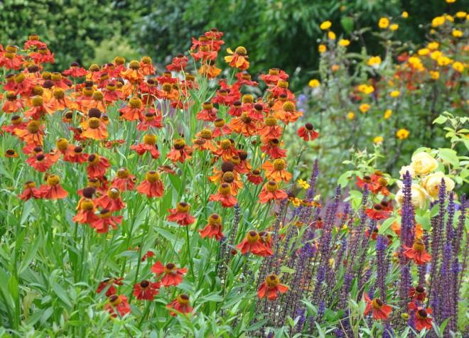 Solbrudar vill ha lätt fuktig jord och god tillgång på näring.