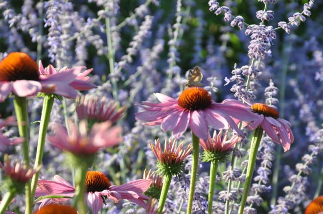 Korta in blomskotten om våren så får du en senarelagd blomning.