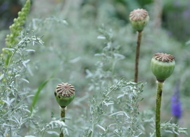 Silvriga toner får trädgården att vibrera av spänning.