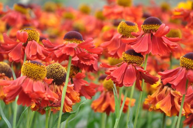 Solbrudar vill ha fuktig och näringsrik jord.