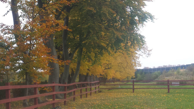 Bokträd bildar alléer på Katrinetorp.