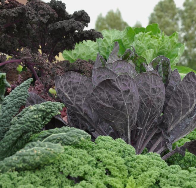 Kål är ett nyttigt livsmedel som passar bra i höstens grytor.