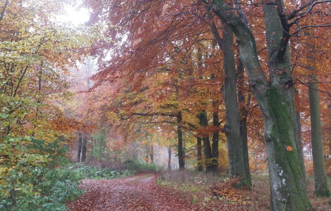 Skogen skyddar mot vind.