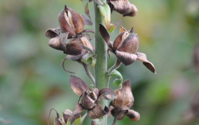 Vissa fröer gror direkt när de kommer i fuktig jord.