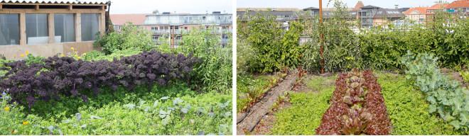 Trädgården prunkar och grönsakerna är fantastiska i takträdgården.