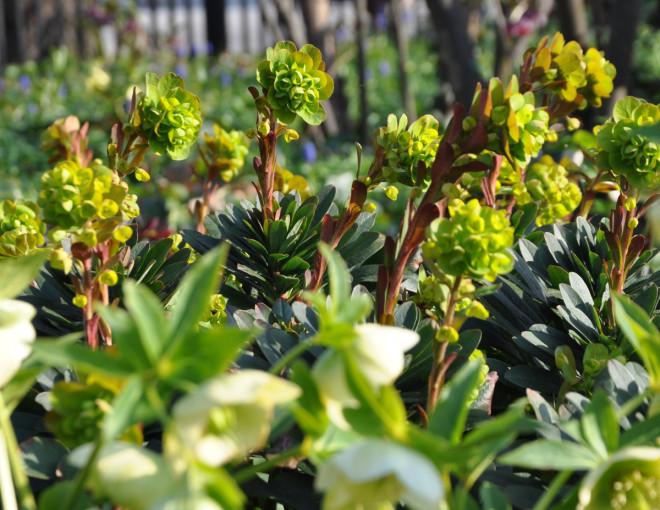 Törelväxter trivs ofta i woodlandmiljö.