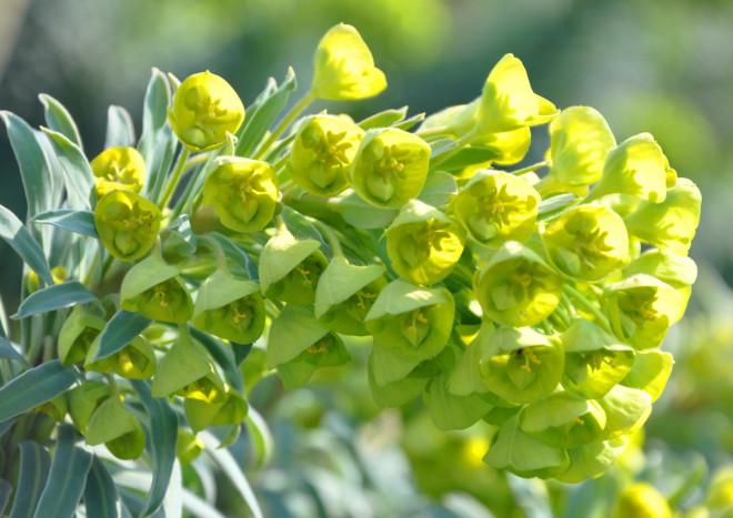 Törelväxterna har en tidig blomning.