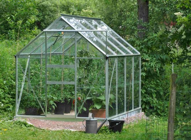 Ett växthus är en bra miljö för odling av tomatplantor.