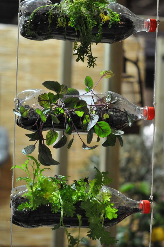 Petflaskor duger också till odling i liten skala.
