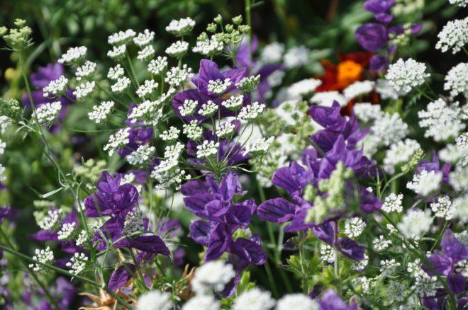 Vita växter kan kombineras med allt utan att skära sig.