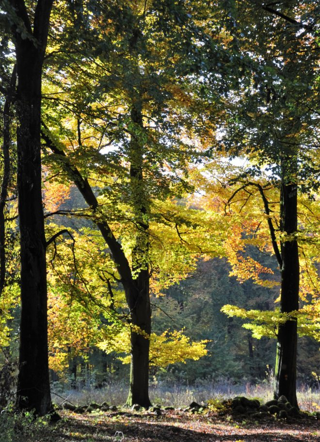 Höstfärgerna på träd och buskar handlar om att spara energi.