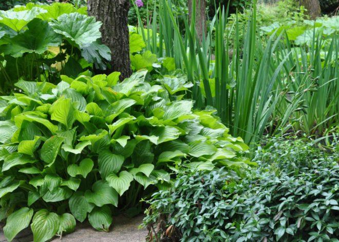 Olika bladformer ger en intressant mix trots att de bara är gröna.