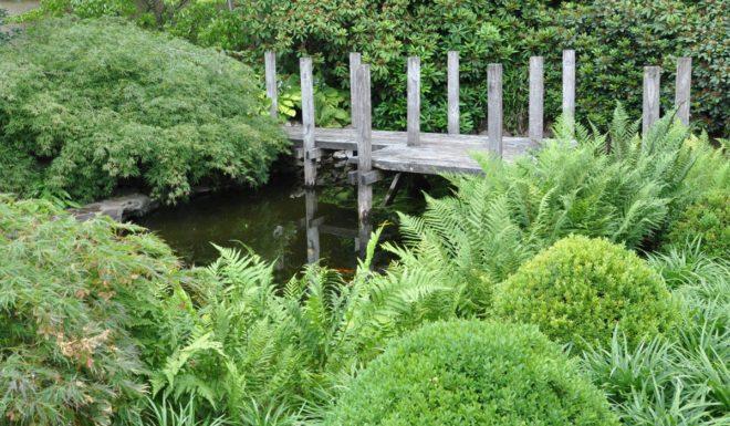 Gröna växter är beroende av fukt.