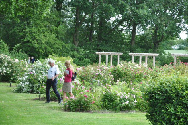 Gerlevparkens avdelning för historiska rosor.