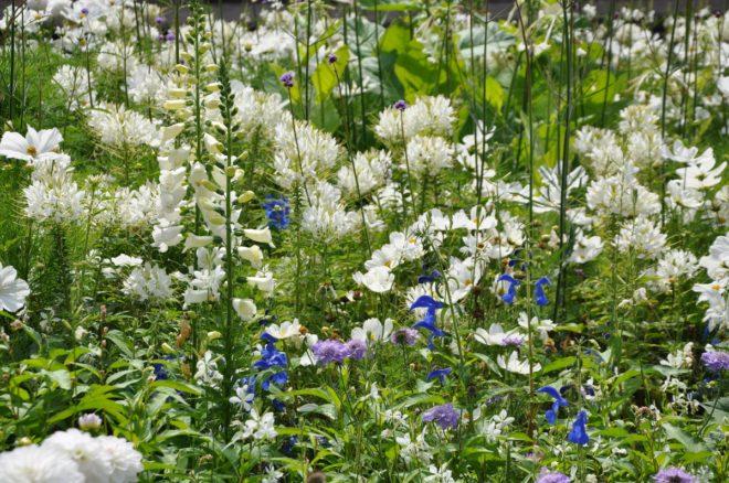 Vita planteringar kan bli mycket effektfulla.