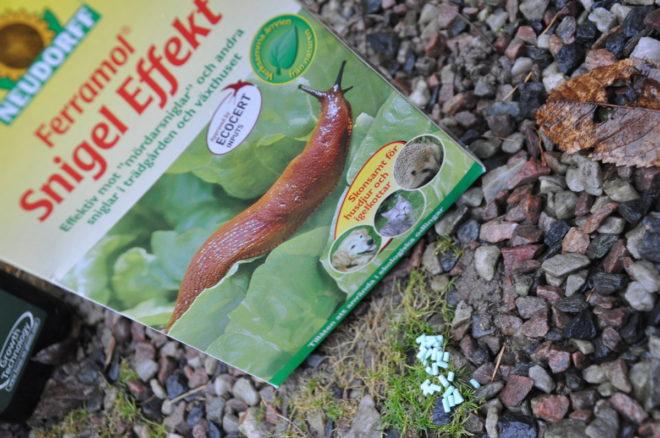 Järnsulfat Ferramol äts upp av sniglarna