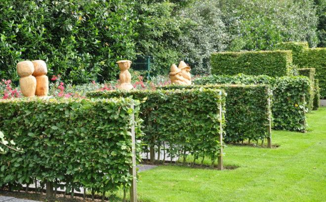 De större plantskolorna har häckprover som man kan beskåda när man väljer typ av häck.
