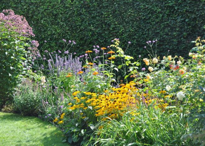 Bokhäck som fond bakom färgrik plantering med granna blommor.