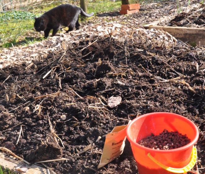 Greenspire trädgårdskonsult hönsgödsel katt luftig jord kompostjord