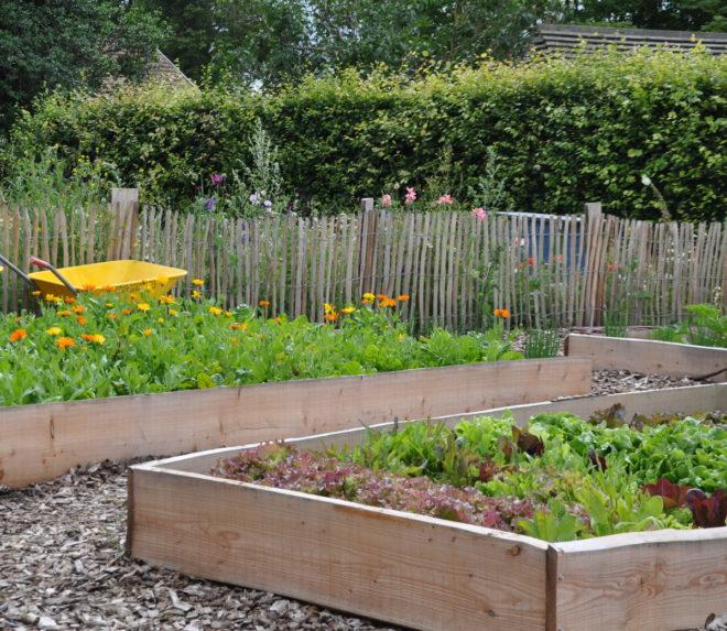 Greenspire trädgårdskonsult pallkrageodling grönsaker sallatsplantor