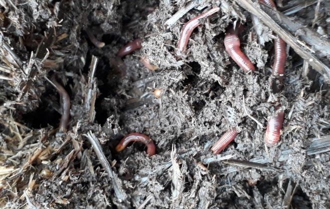 kompostmask daggmaskar jordorganismer nedbrytare Greenspire Trädgårdskonsult mark jord mull