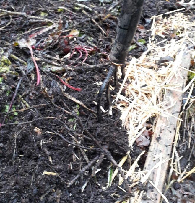 kompostering grönsaksavfall kompostjord Greenspire Trädgårdskonsult mark jord mull