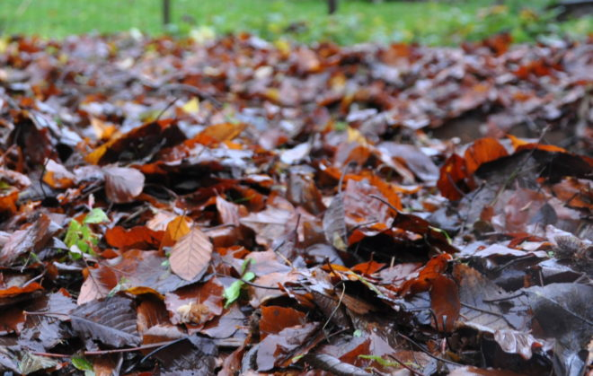 höstlöv kompost Greenspire Trädgårdskonsult mark jord mull