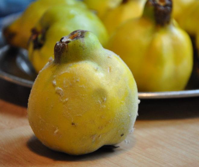 Greenspire trädgårdskonsult kvitten frukt Cydonia oblonga