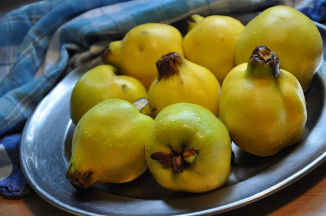 Greenspire trädgårdskonsult kvitten doftande frukt Cydonia oblonga