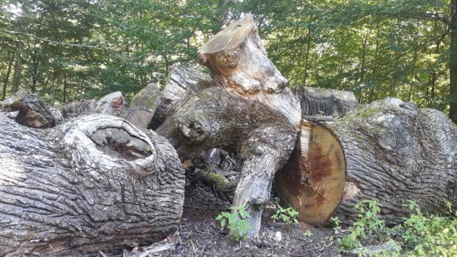 ekstockar stamdelar faunadepå jätteek greenspire trädgårdskonsult biologisk mångfald