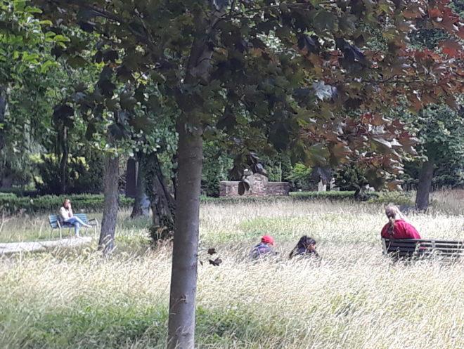 äng biologisk mångfald höggräs greenspire trädgårdskonsult trädgårdsrådgivning