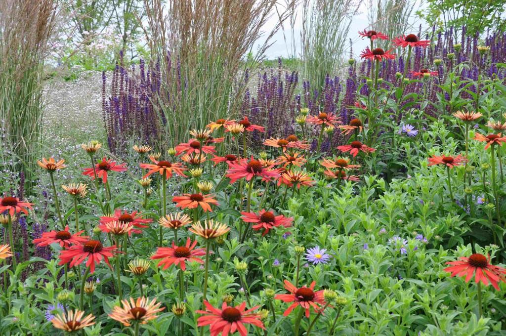 Att komponera vackra rabatter lär du dig göra på en kurs med Greenspire Trädgårdskonsult. På denna bild nya orangeröda solhattar i kombination med stäppsalvia och prydnadsgräs.